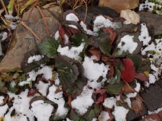 ...i zimą