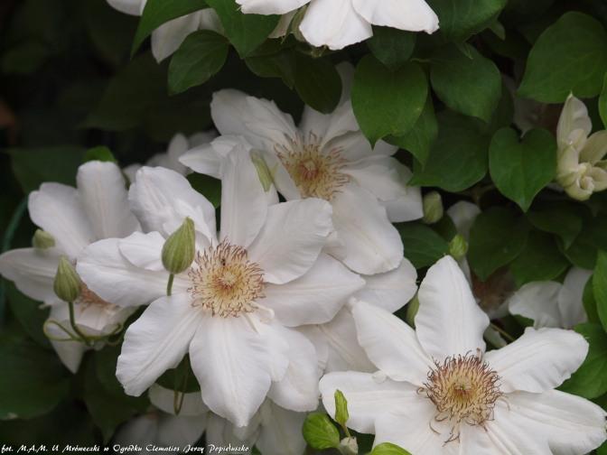 kwiaty pojedyńcze
